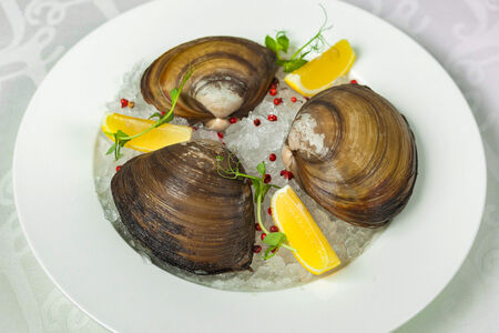 Моллюск Спизула